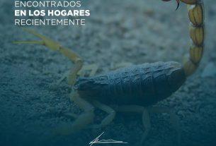 PICADURAS DE ALACRANES
